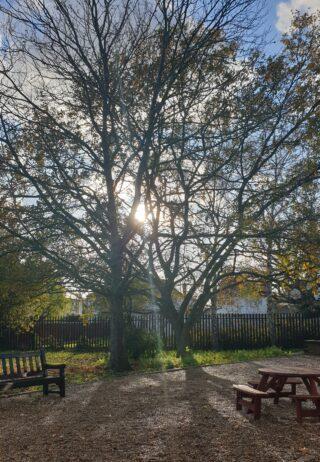 Ashley College Garden